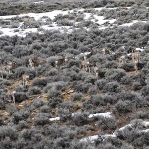 2017 April LaBarge Area Winter Ranges_Greys River Deer Herd_ Phil Damm picture DSC_0374